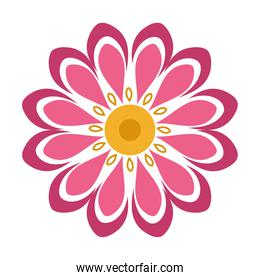 flower petal natural decoration isolated icon style