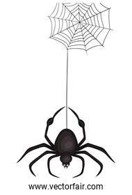 Halloween spider cartoon with spiderweb vector design