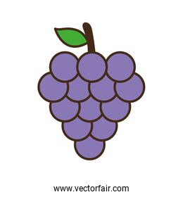 grapes line and fill style icon design