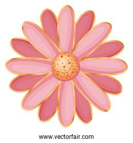 Isolated pink flower vector design