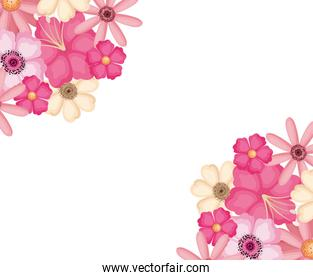 Isolated pink and white flowers vector design