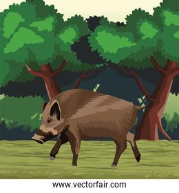 wild pig animal nature in the landscape