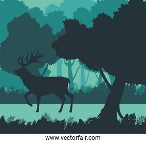 wild reindeer animal silhouette in the forest scene