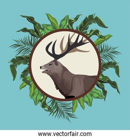 wild reindeer animal nature with leafs frame