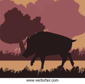 wild pig animal nature silhouette with landscape scene
