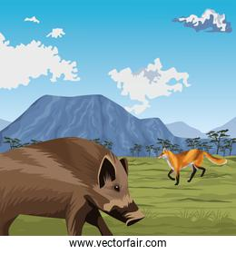 wild pig and fox in the landscape
