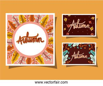 Set of frames with autumn leaves on yellow background vector design