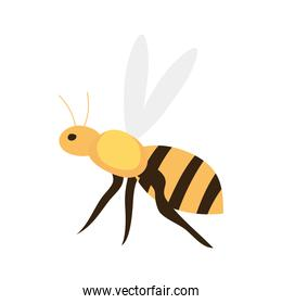 bee insect icon, on white background