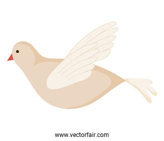 white dove flying on white background