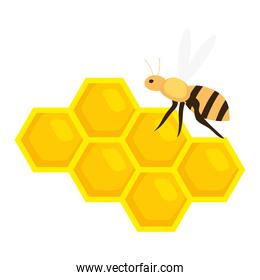 honeycomb with bee on white background