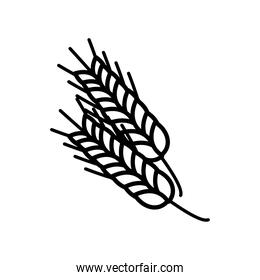 barley spikes line style icon