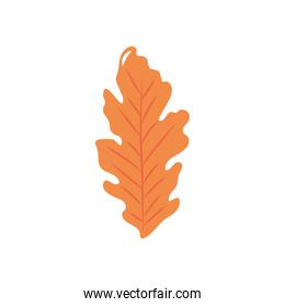 autumn leaves concept, hawthorn icon, flat style