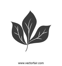 autumn leaves concept, chestnut leaf icon, silhouette style