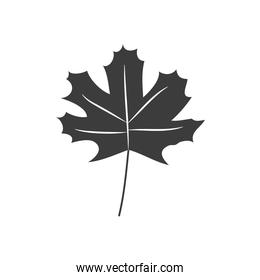 autumn leaves concept, maple leaf icon, silhouette style