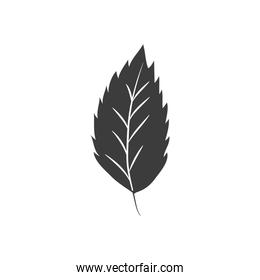 autumn leaves concept, elm leaf icon, silhouette style