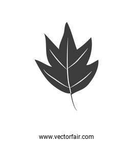 autumn leaves concept, hawthorn leaf icon, silhouette style