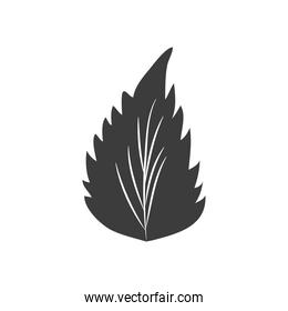 autumn leaves concept, birch leaf icon, silhouette style