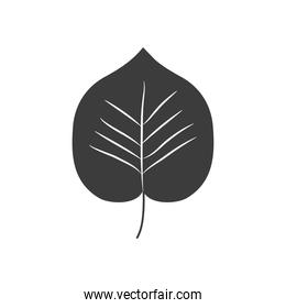 autumn leaves concept, linden leaf icon, silhouette style