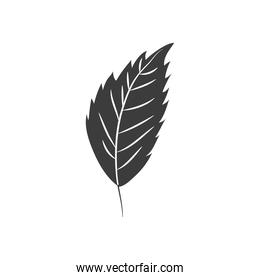 autumn leaves concept, hornbeam leaf icon, silhuoette style
