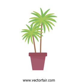 potted palm plant decoration isolated design white background