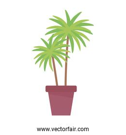 potted palms plant nature isolated design white background