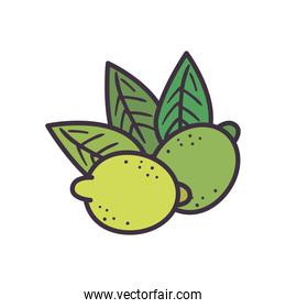 lemons with leaves line and fill style icon vector design
