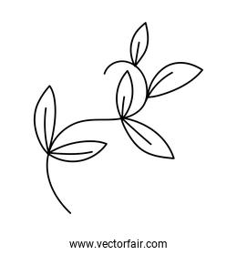 branch leaves foliage nature isolated icon over white background line style