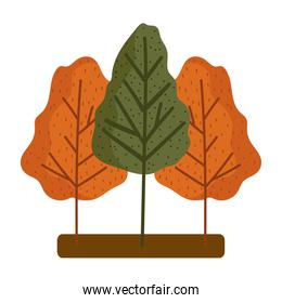 forest trees season foliage autumn isolated design white background