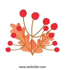 autumn berries leaves foliage isolated design white background