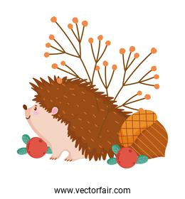 autumn hedgehog acorn berries banches isolated design white background