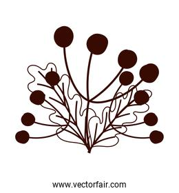autumn berries leaves foliage isolated design white background line style