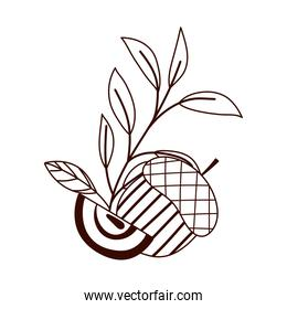 autumn apple acorn leaves isolated design white background line style