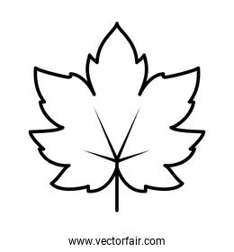 maple leaf icon, line style