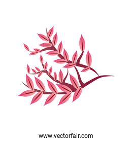 decorative chinese tree branch on white background