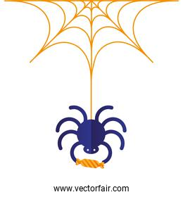 Halloween spider with candy vector design