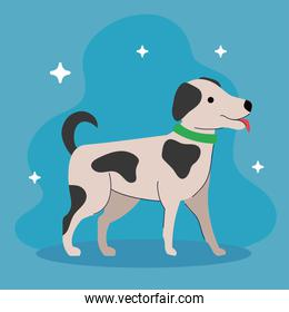 cute dog with spotted of black color