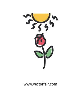 rose flower under sun line and fill style icon vector design