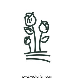 rose flowers line style icon vector design