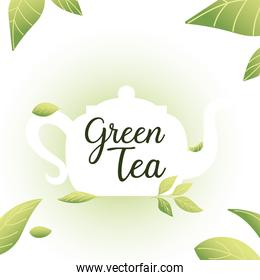 green tea with pot and leaves vector design