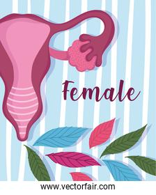 female human reproductive system, striped floral card design