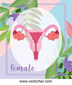 female human reproductive system, organ of the uterus with flowers