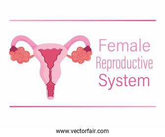 female human reproductive system ovary, vagina, uterus structure