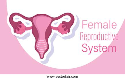 female human reproductive system, internal sex organs of a woman