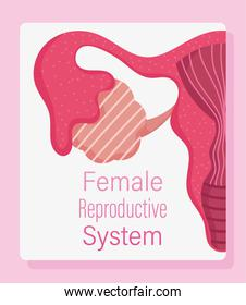 female human reproductive system, women physiology health