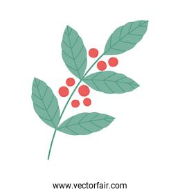 coffee seeds branch foliage nature isolated icon style