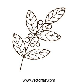 coffee seeds branch foliage nature line icon style