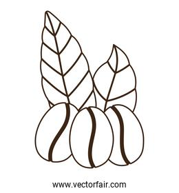 coffee grains leaves organic nature line icon style