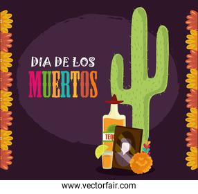 day of the dead, photos frame tequila cactus and flowers, mexican celebration