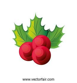 holly berries with green leaves on white background