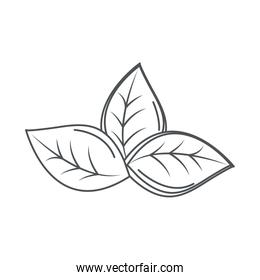 ecology leaves nature environment line icon style